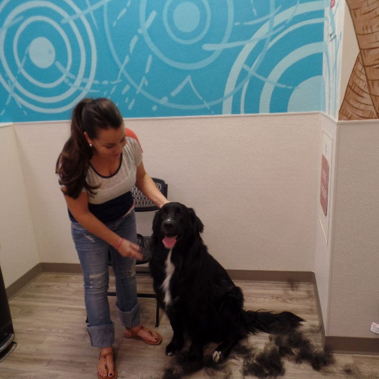 Dog wash happy pets palace solutioingenieria Gallery