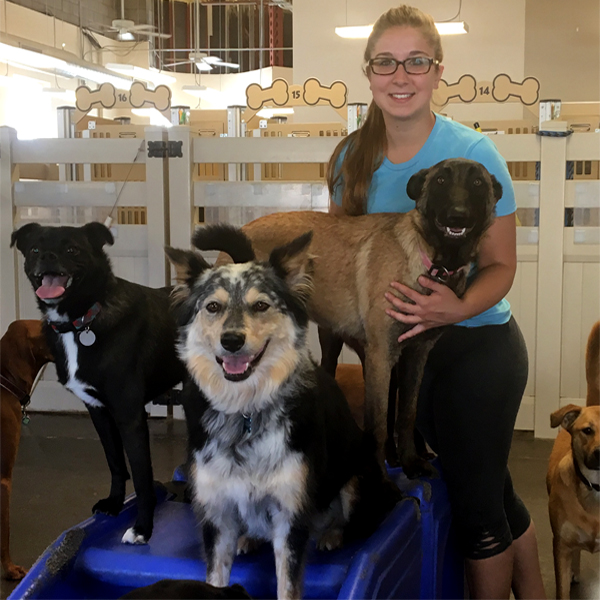 Dog Daycare & Boarding in Mesa, Gilbert & Chandler | Happy Pets Palace